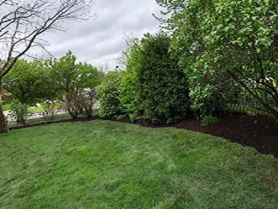 Landscaping tree line