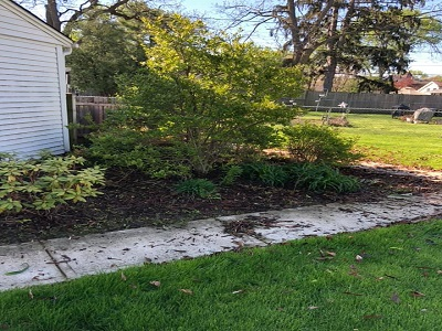 Landscaping unmulched