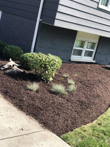 Mulching Makes a Difference